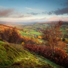Rosedale View