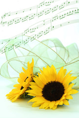 オーガンジーのリボンをつけたヒマワリの花束
