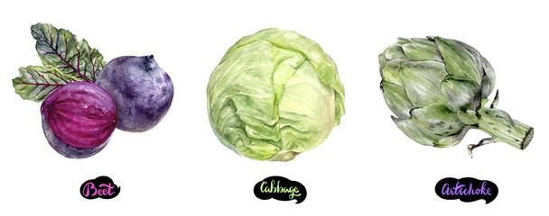 Artichoke, beetroot, cabbage set watercolor hand drawn illustration.