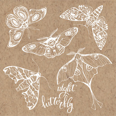 Butterflies, night insects. Vector hand-drawn illustration on kraft paper. Collection of isolated elements for design.