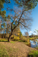 autumn in sunny day in park with distinct tree trunks and tourist trails