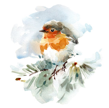 Watercolor Bird Robin on the snowy Branch Hand Drawn Winter Illustration isolated on white background