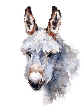 Cute Donkey Watercolor Animal hand painted illustration isolated on white background