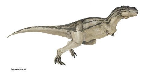 ダスプレトサウルス 白亜紀後期の獣脚類であり、ティラノサウルスに酷似するが、生息した年代がティラノサウルスよりも早く、小型の体形であった。角竜や装盾類の仲間を捕食した。イラストはティラノサウルスとの相違を示すために体型をやや細身に描いたイラストである。。