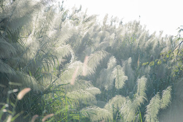 flower grass impact sunlight on sunset - natural background