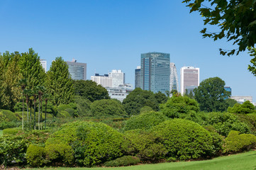 Green trees in a park landscape with tall business buildings on the background