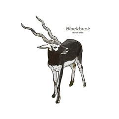 Antelope Series Blackbuck - Vector