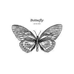 Orange Monarch Butterfly , Hand draw sketch vector.