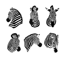 Set of zebras head. Savannah animal ornament. Wild animal texture. Striped black and white. Vector illustration isolated on white background.