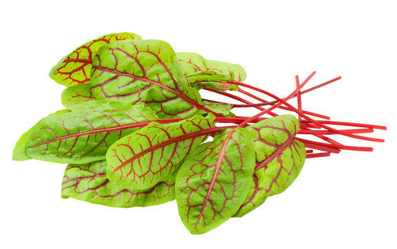 Red veined sorrel leaves on white background, clipping path, full depth of field