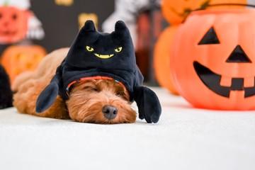 ハロウィン パーティー 犬