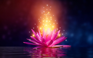 Acrylic Prints Lotus flower lotus Pink light purple floating light sparkle purple background