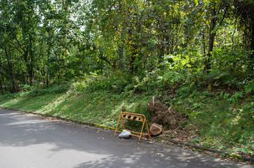 道路沿いの倒木の木