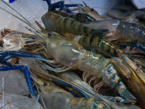 Close up giant freshwater prawns in The fresh food market
