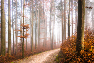 footpath at a forest
