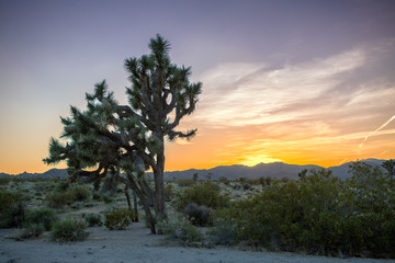 Impression of Joshua Tree National Park in California