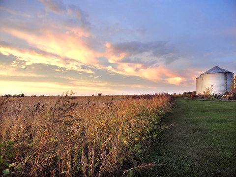 Midwestern Farm with Silo and Soybean Field at Sunset