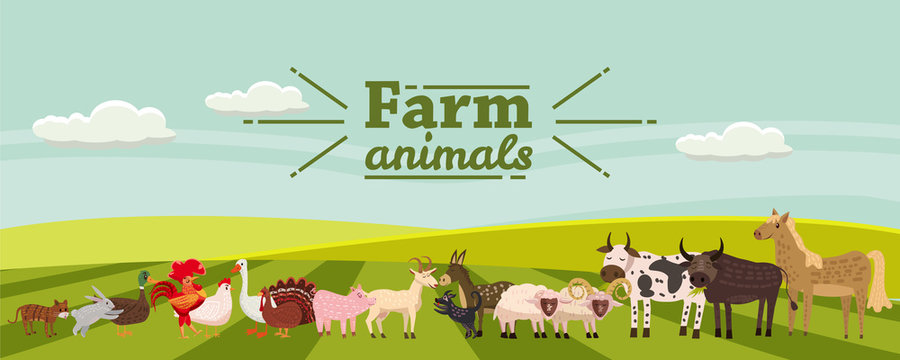 Farm animals and birds set in trendy cute style, including horse, cow, donkey, sheep, goat, pig, rabbit, duck, goose, turkey, rooster,ram, dog, cat, bull and chicken, isolated on rural landscape, farm