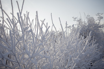 Beautiful winter frosty forest covered with snow and hoarfrost