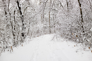 Winter forest. Winter landscape with road and frosty trees in snowy forest. New Year winter fairytale