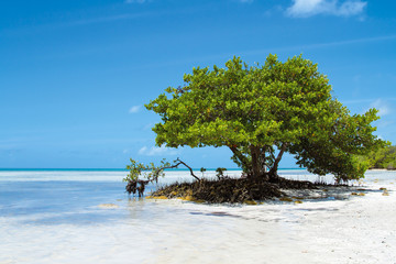 Lonely Tree at Annes Beach at the Florida Keys in Florida Wall mural