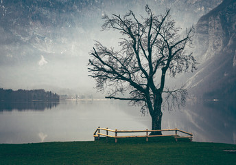Famous tree at lake Bohinj, Slovenia