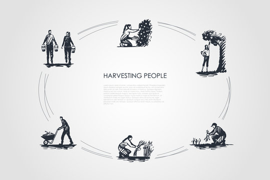 Harvesting people - people picking fruits and carrots, binding grass, carrying and transporting harvest vector concept set