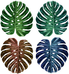 Set of new technical tropical leaves isolated on white background. Vector tropical leaf Monstera, isolated on with background. Botanical exotic vector illustrations, hand drawn floral elements