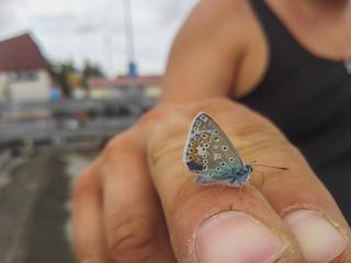 kleiner Schmetterling - small Butterfly