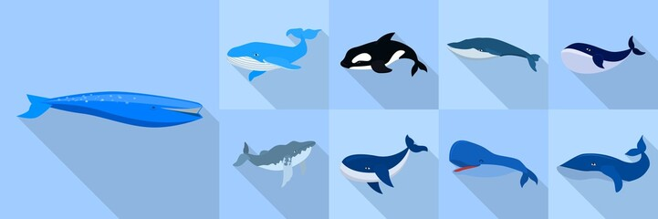 Whale icon set. Flat set of whale vector icons for web design