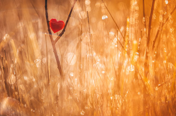 Red heart in nature with wonderful morning drops background and beautiful light. Original wallpaper or postcard for wedding or valentine day, with space for quote.