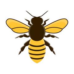 honey bee modern flat vector. isolated illustration