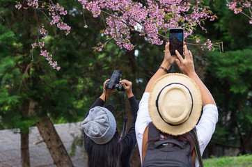 Tourists are taking pictures