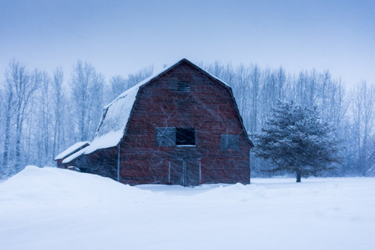 Old Barn in a Snow Storm Winter Landscape