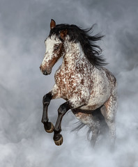 Fototapete - Appaloosa horse rearing in light smoke.