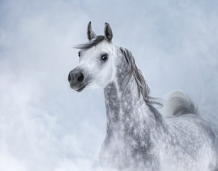 Fototapete - Arabian horse in light smoke.