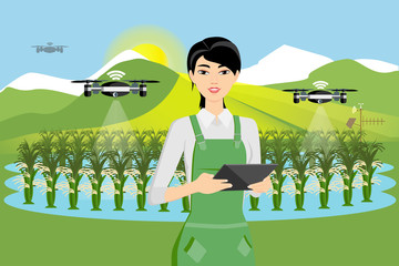Etiqueta Engomada - Farmer and drone are watering rice in a field. Smart farming