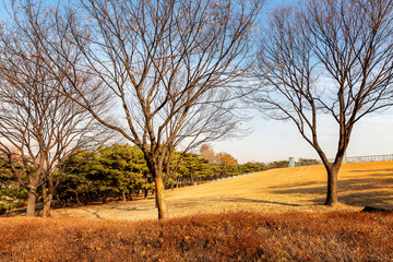 Field with bare trees, bright blue sky, beautiful landscape in autumn park