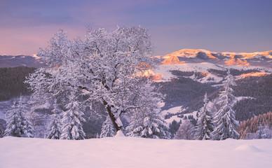 Winter in Pokutski Mountains, Ukraine