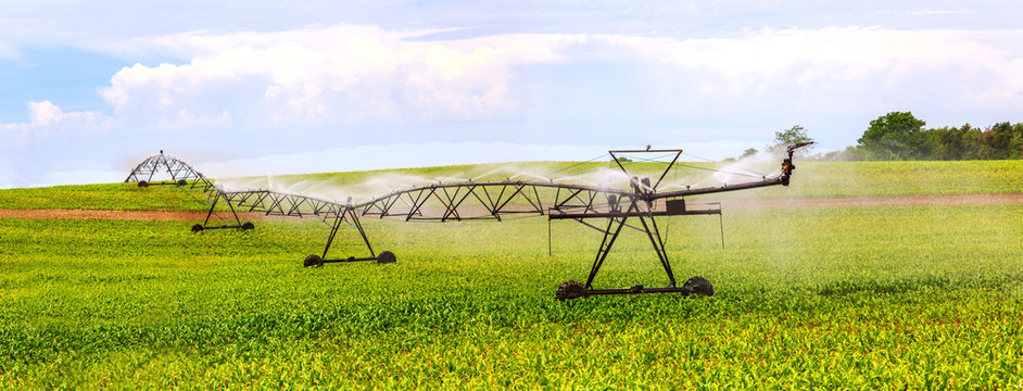 Water irrigation system spraying water in a soybean field