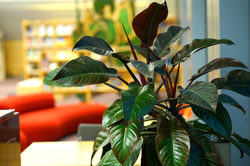 Ornamental plant in the National Library of Latvia
