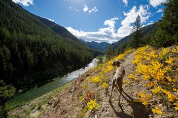 Dog walking along the Flathead River