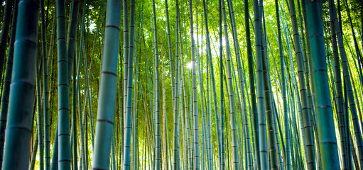Spoed Fotobehang Bamboo Bamboo Groves, bamboo forest in Arashiyama, Kyoto Japan.
