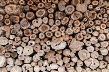 Round teak wood stump background.