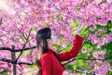Wall Mural - Woman wearing Vietnam culture traditional in cherry blossom park.
