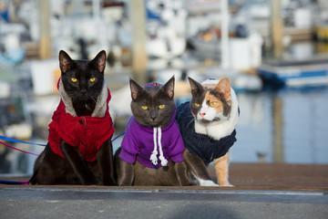 cat family 2