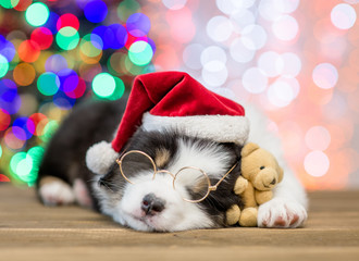 Australian shepherd puppy in red santa hat and eyeglasses sleeping with toy bear with Christmas tree on background
