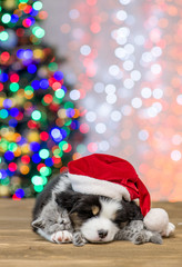 Australian shepherd puppy  in red santa hat and baby kitten sleep together. Empty space for text