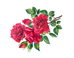 Red roses branch. Watercolor drawing flower for Valentine day
