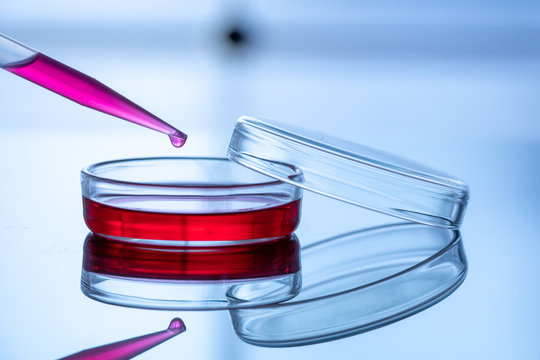 Petri dish and a pipette on a blue background in a scientific genetic laboratory